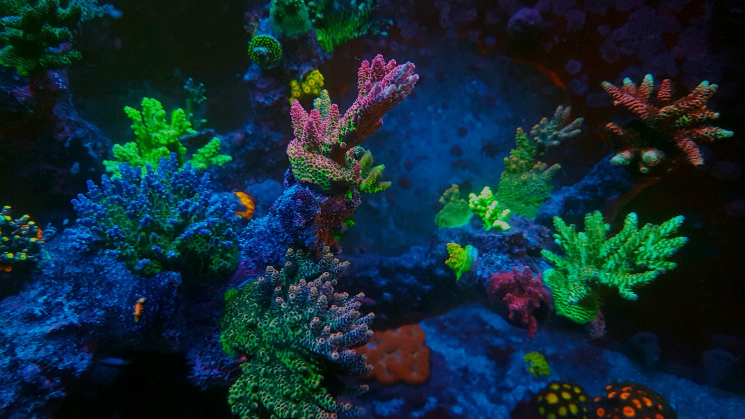 Richtige Größe für ein Meerwasseraquarium