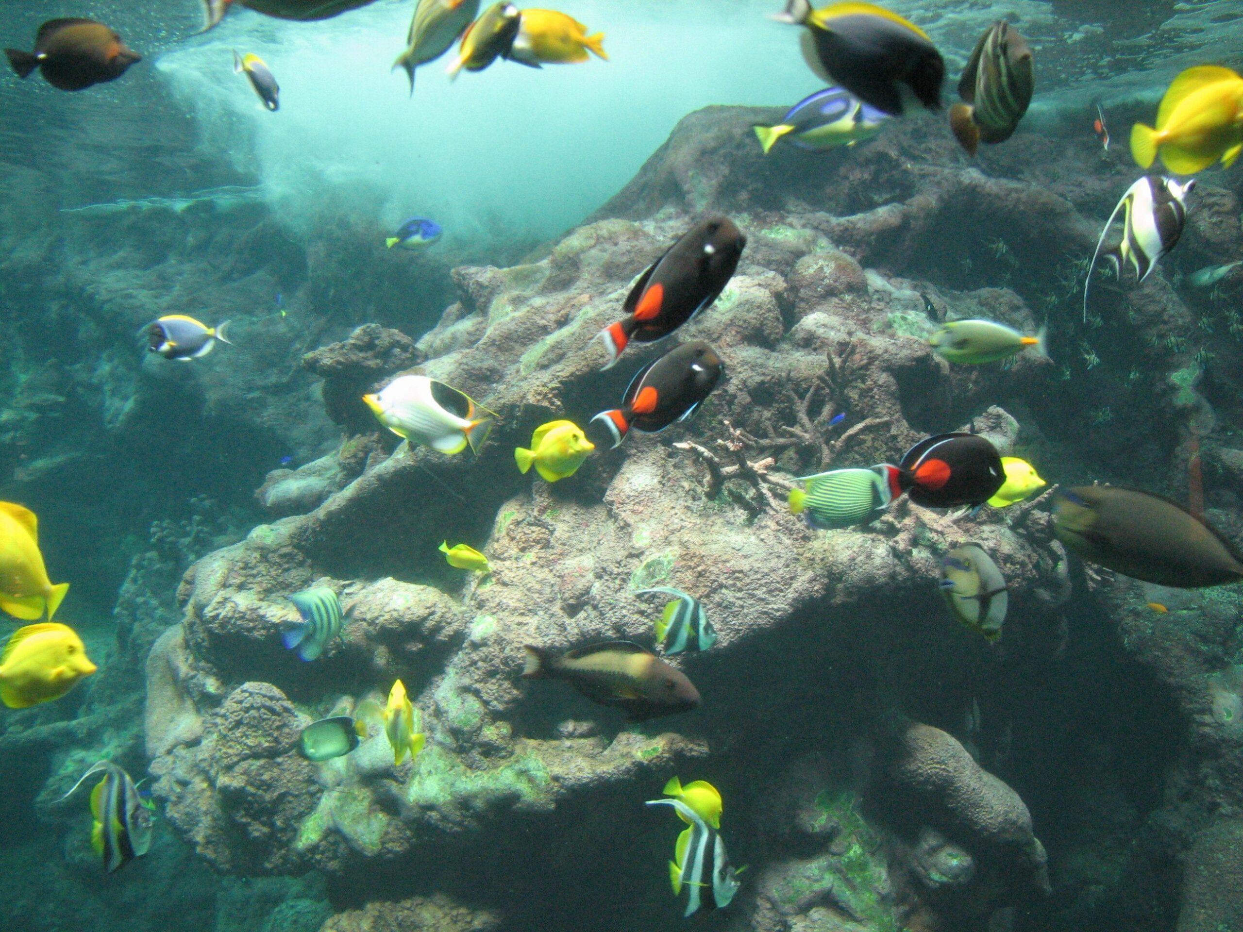 Wie viel Arbeit ist ein Meerwasseraquarium