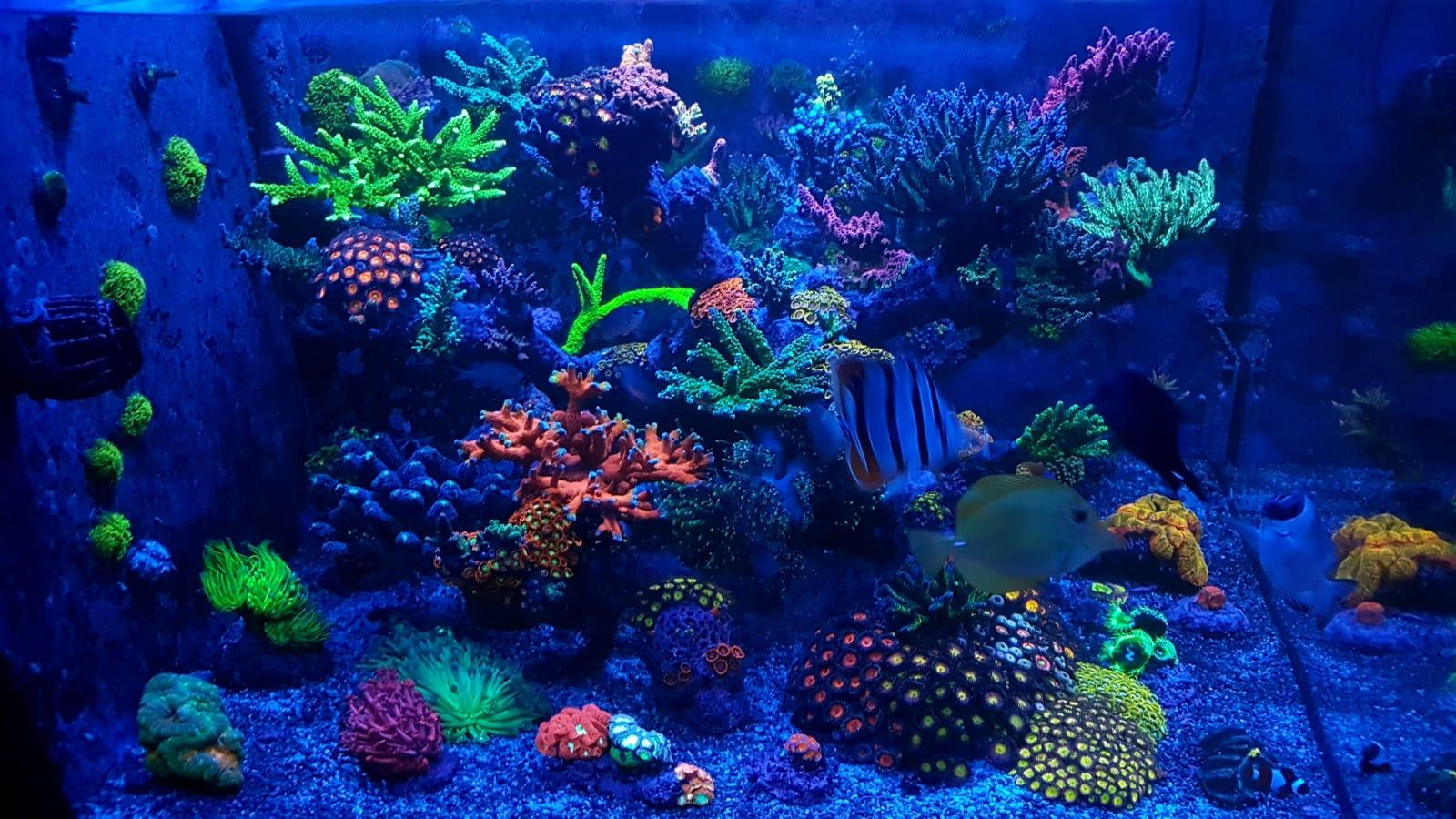 Wie viel kostet ein Meerwasseraquarium