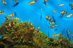 aquarium-cape-town-3-1329002