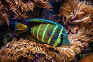 tropical-fish-1333620